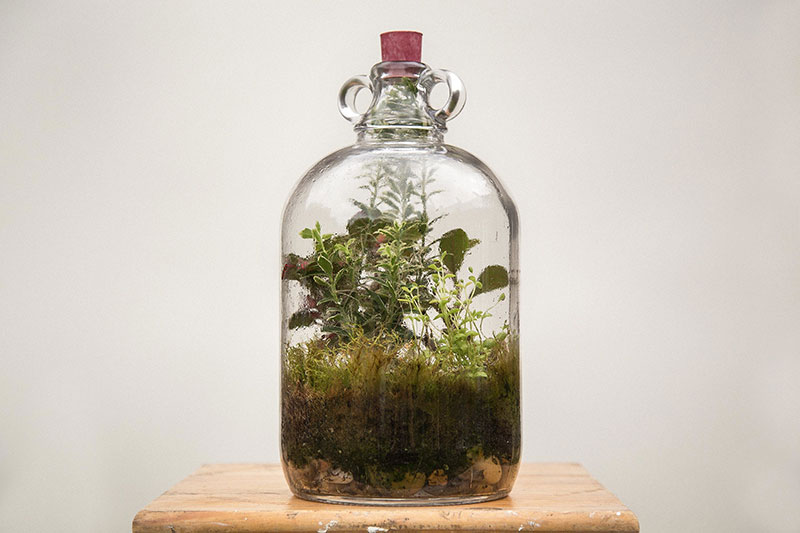 london-terrariums-01-1