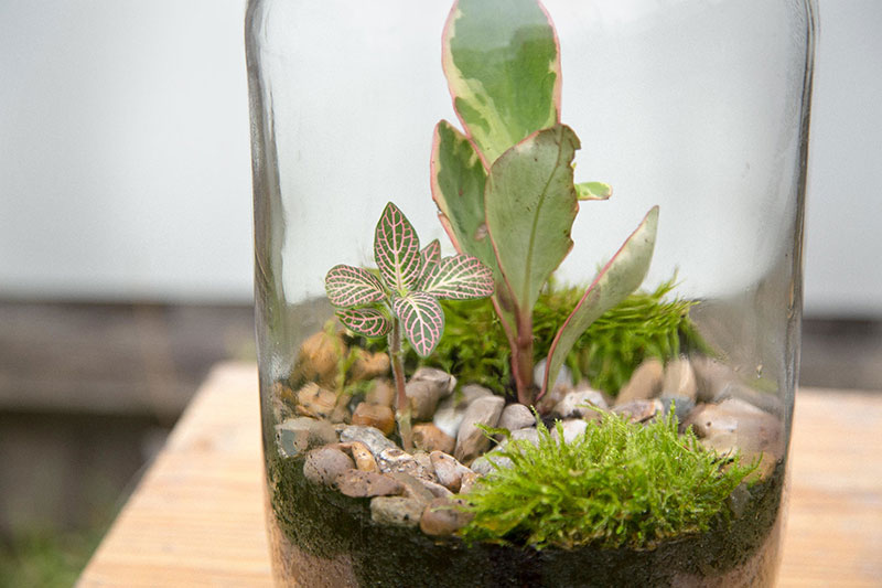 london-terrariums-04-1